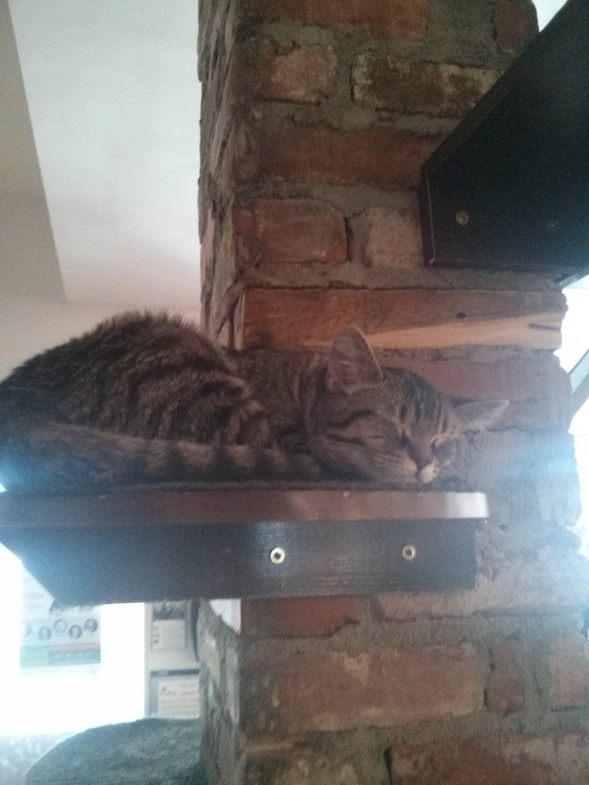 montreal_cat_cafe