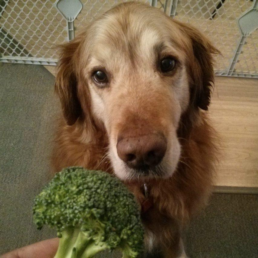 fluffster_broccolli