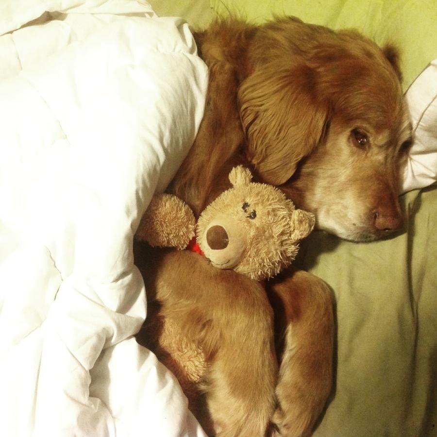 Fluffster cuddling Teddy